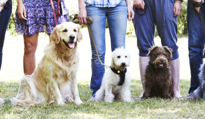 Group with dogs2